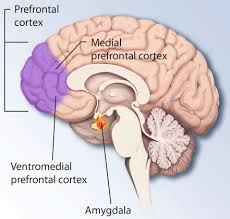 What Part Of The Brain Stores Memory >> Do Long Term Memories Move From The Hippocampus To The Neocortex